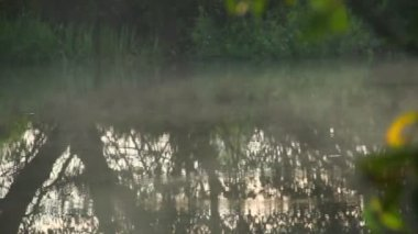 Fog hovering over the river — Wideo stockowe