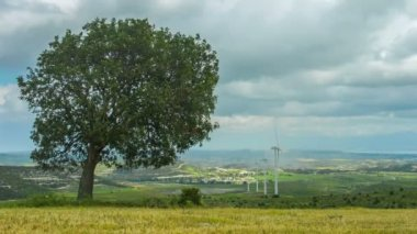 Tree growing on wind farm. Autumn landscape. Global responsibility for ecology — Stock Video
