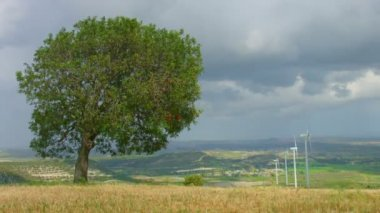 Time lapse of beautiful field, green tree near wind farm, clouds, weather change — Stock Video
