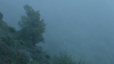 Background for mysterious story, horror film atmosphere, dangerous foggy cliff — Stock Video
