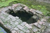 Green algae around of ancient well — Stock Photo