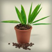 Plants in a pot from coffee — Stock Photo