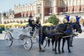 Carriage and horses in Krakow — Stock Photo