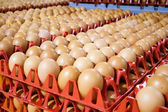 Egg processing plant near Bergamo in Italy — Stockfoto