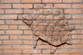 Alívio de tartaruga na parede do lado de fora do zoológico de Berlim — Fotografia Stock