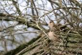 Sparrows (Passeridae) — Stock Photo