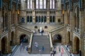 People exploring  the National History museum in London on June — Stock Photo