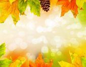 Hojas de otoño caídas de color — Foto de Stock