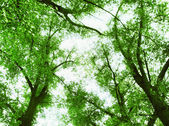 Green trees against blue sky — Stock Photo