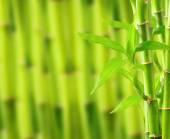 фон натурального бамбука — Стоковое фото