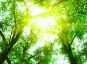 Sun in the green leaves — Stockfoto