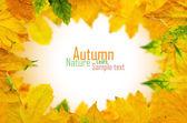 秋のカエデを葉します。 — ストック写真