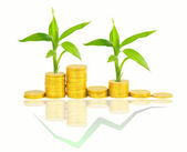 Gold coins and plant isolated — Foto de Stock