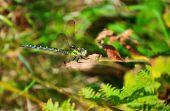 Libelle — Stockfoto