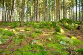 Forest panorama — Стоковое фото