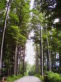 Tree alley — Stock Photo