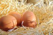 Farm fresh eggs on straw close up — Stock Photo