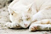 Gato dormindo — Fotografia Stock