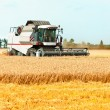 Combine cutting wheat on the field. Harvest time. — Stock Photo #52180289