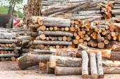 Different size stacked wood logs. Outdoors storage. — Stock Photo