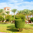 Topiary tree in Egyptian formal garden. Summertime outdoors. — Photo #85020316
