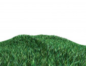 Green grass isolated on white illustration — Foto Stock