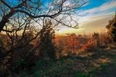 Beautiful panoramic scene with skyline autumn colors. — Stock Photo