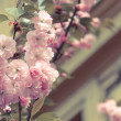 Spring blossoming tree retro colors spring time. — Stock Photo #75963485