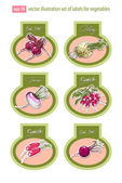 Conjunto de vectores etiquetas con verduras. vector. — Vector de stock