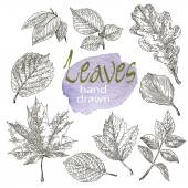 Collection of highly detailed hand drawn leaves isolated on white background — Stock Vector