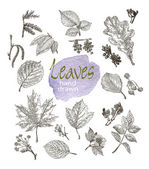 Collection of highly detailed hand drawn leaves and inflorescence  isolated on white background — Stock Vector