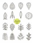 Vector collection of varieties of leaf shape. — Stock Vector