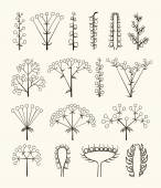 Set of vector different types of inflorescence isolated on white. — Stockvektor
