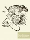 Set of linear drawing mushrooms, vintage vector illustration. Spongy mushrooms — Stock Vector