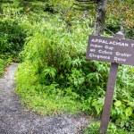 Appalachian Trail — Stock Photo #52639459