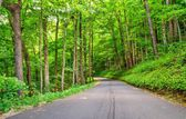 Roaring Fork Motor Nature Trail — Stock Photo