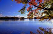 Autumn Lakeshore — Stock Photo