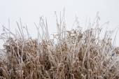 Dondurulmuş — Stok fotoğraf