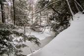 Winter In The Wilderness — Stock Photo