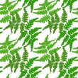 Seamless pattern with branches of fern on a white background. Vector eps 10. — Stock Vector #57704985