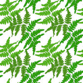 Seamless pattern with branches of fern on a white background. Vector eps 10. — Stock Vector