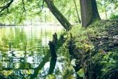 Lake in city park — Stock Photo