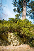 Rocks in forest — Stock Photo