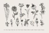 Botânica. Conjunto. Flores vintage. — Vetor de Stock