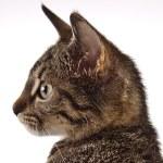 Cat, Kitten — Stock Photo #59667235