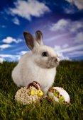 Easter bunny en kip — Stockfoto