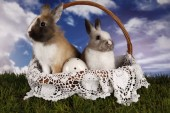 Easter, bunny and chicken — Stock fotografie