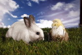 Easter, bunny and chicken — Foto de Stock