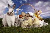 Пасха, кролик и цыпленок — Стоковое фото