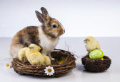 Easter, bunny and chicken — ストック写真